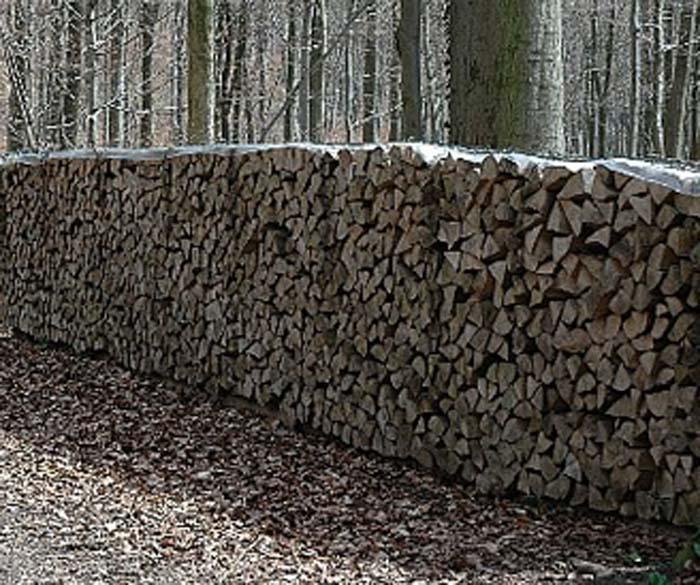 Hazai fafajok: A bükkfa